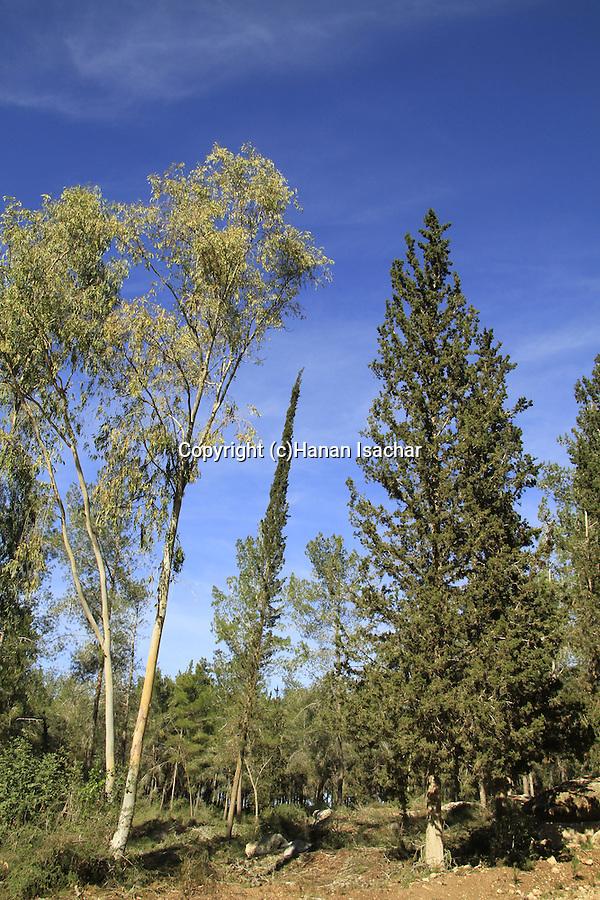 Israel, Shephelah, Ben Shemen forest