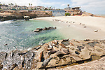 Harbor seals lay together below the seawall on the Children's Pool beach on the coast of La Jolla, California