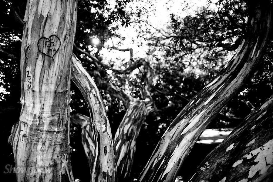 Image Ref: M279<br /> Location: Royal Botanical Gardens, Melbourne<br /> Date: 03.06.17