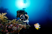 Diver and damselfish at the Liberty wreck in Tulamben Bali.<br /> The damselfish was protecting her eggs and coming really close to the diver to chase her off.