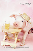 Interlitho, Alberto, ANIMALS, pigs, photos, pig, hat, bear(KL15018/7,#A#) Schweine, cerdos
