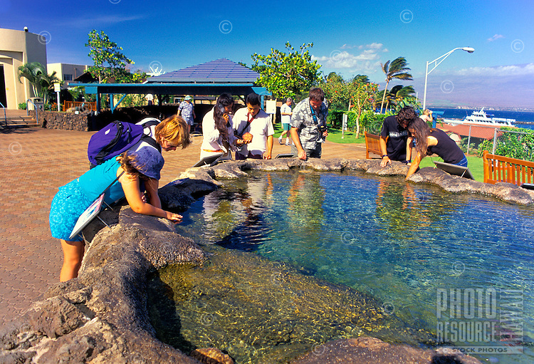 The Maui Ocean Center is unique attraction where visitors can see and feel Hawaii's marine life up close. Here tourists get hands interaction in a tidal pool tank.