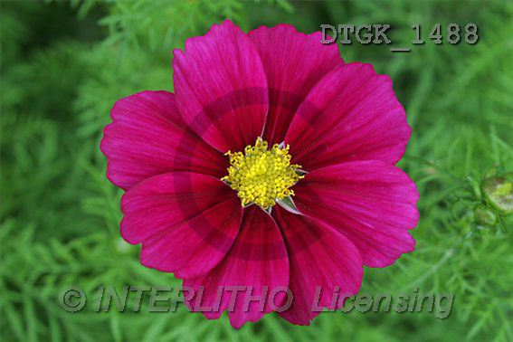 Gisela, FLOWERS, photos(DTGK1488,#F#) Blumen, flores, retrato