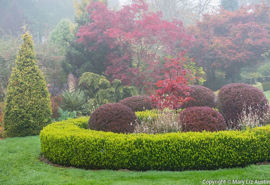 Vashon Island, Washington: Fall perennial garden with boxwood, barberries, maples and evergreens, Froggsong Gardens
