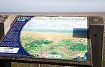 Wildflowers on beach information sign, Aldeburgh, Suffolk