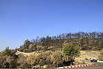 Israel, Mount Carmel, Road 721 after the big fire