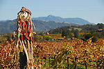 Scarecrow in Alexander Valley near Russian River.