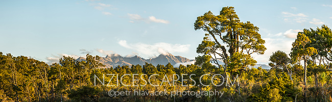Coastal forest with mountain background in South Westland, Westland Tai Poutini National Park, UNESCO World Heritage Area, New Zealand, NZ