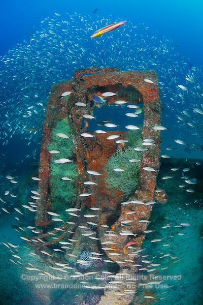 QT1271-D. Spottail Grunts (Haemulon maculicauda) schooling around La Salvatierra shipwreck, near La Paz. Baja, Mexico, Sea of Cortez, Pacific Ocean.<br /> Photo Copyright &copy; Brandon Cole. All rights reserved worldwide.  www.brandoncole.com
