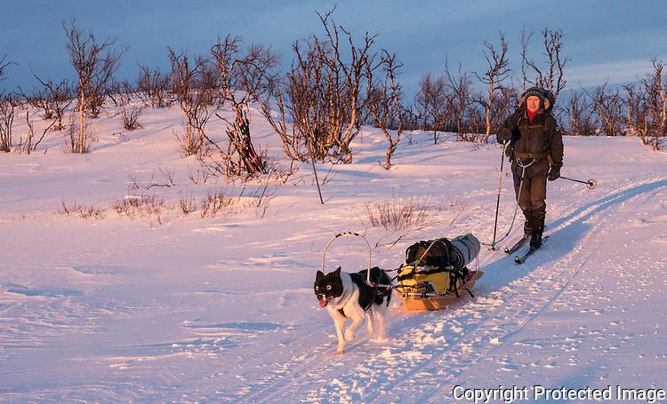 Mann med pulk, ski og grønlandshund på vei sørover fra Karlebotn. ---- Man with skis and greenland dog.
