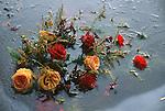 Frozen flowers in a lake in Copenhagen.