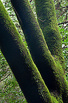 Green moss on tree trunk, Redwood Regional Park, East Bay Hills, California