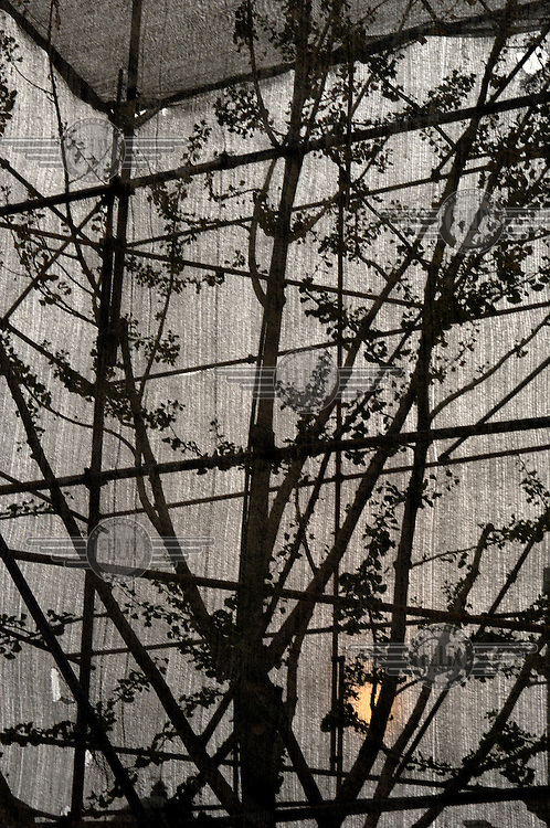 Environmental protection - a tree surrounded by scaffolding and netting on a construction site downtown.