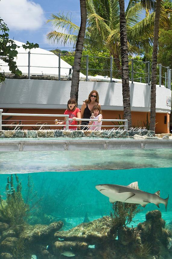 Shark Encounter<br /> Coral World<br /> St. Thomas<br /> U.S. Virgin Islands