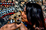 Puppy Bowl 2017