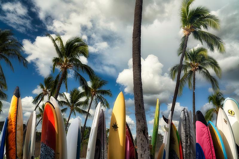 Surfboards and palm trees. Maui, Hawaii