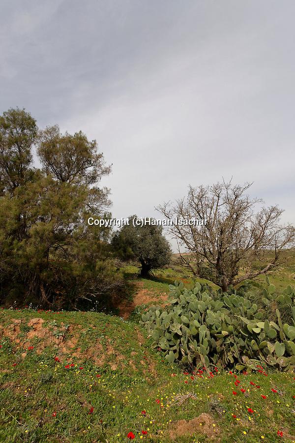 Israel, Bitronot Ruhama in Besor region