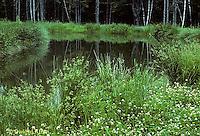 PO01-012z  Vernal (spring) pond - temporary
