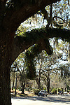 The fern covered limbs of a live oak reach out over the street.