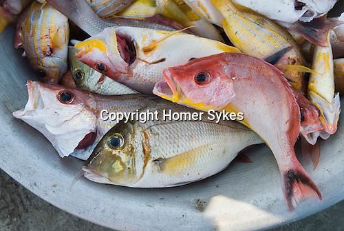 Ngwe Saung beach resort.  Fish caught over night. Myanmar Burma 2011.