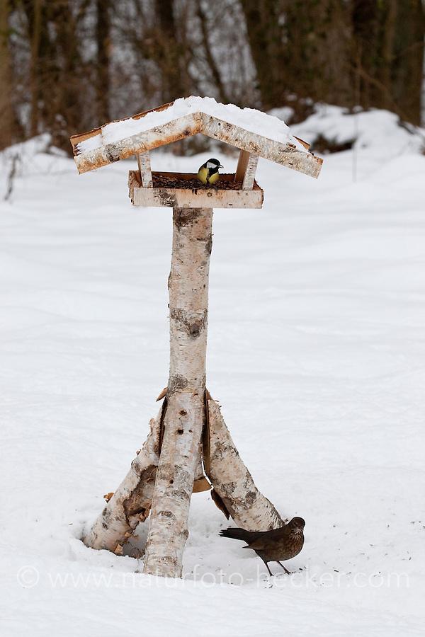 Kohlmeise, an der Vogelfütterung, Fütterung im Winter bei Schnee, im mit Körnern gefüllten Futterhäuschen, Vogelhäuschen, Futterhaus, Vogelfutterhäuschen, Vogelfutterhaus, Vogelhaus, Winterfütterung, Kohl-Meise, Meise, Parus major, great tit