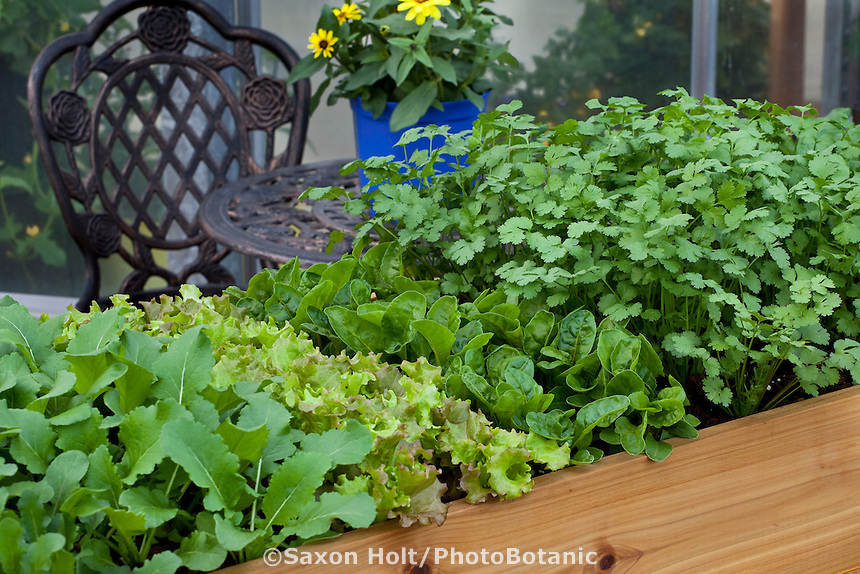 "Raised bed ""salad bar"" demonstration garden for small space balcony garden"