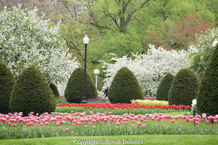 Public Garden spring afternoon flowers, Boston, MA tulips