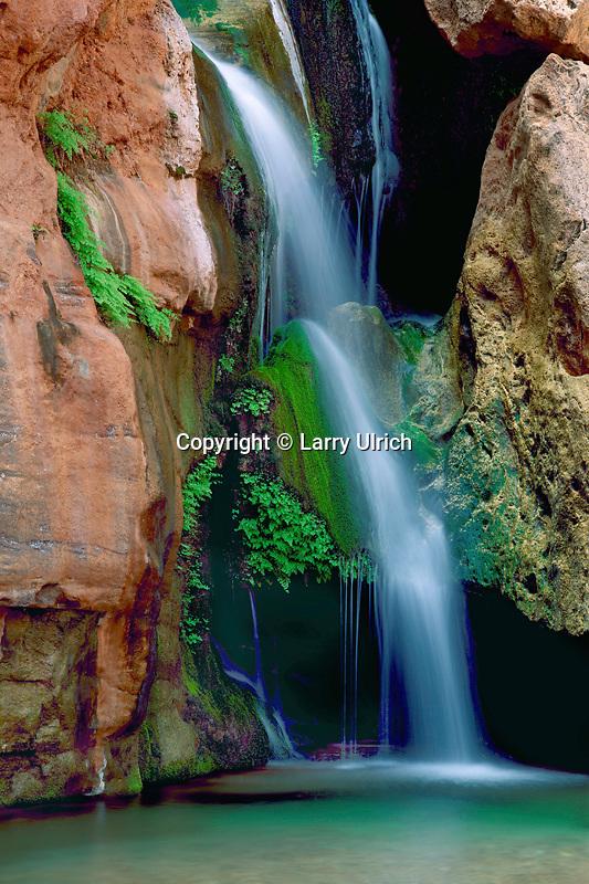 Venus maidenhair ferns<br /> Elves Chasm,  Royal Arch Creek<br /> Grand Canyon National Park<br /> Colorado Plateau,  Arizona