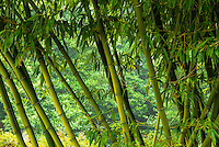 Bamboo, Washington