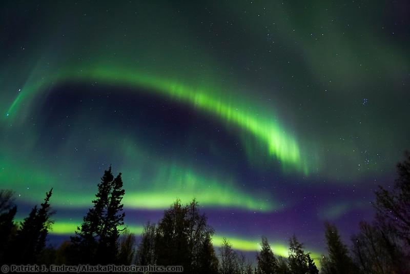 Aurora borealis or northern lights swirl over spruce and birch trees in Fairbanks, Alaska
