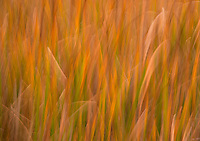 Abstract of marsh grasses at Bodie Lighthouse, Outer Banks, NC