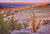 Sunrise on the Sierra Crest