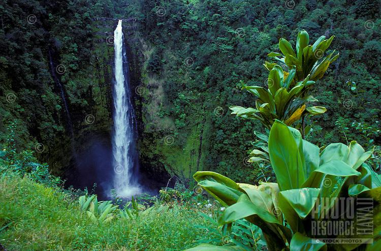 Akaka Falls, located along the Hamakua Coast