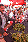 Sana, San'a, Sanaa. la perla d'Arabia, Arabian Pearl qat addicted in yemen. Qat is a light drug, in green leaves. Men use to chew and keep in mouth from afternoon to late evening. Used to heal hunger pains and stun, qat has become a social problem becouse one third of family incomes goes to qat purchases. consumatori di qat. il qat è una droga leggera. Si presenta in piccole foglie verdi, che vengono masticate e tenute, sotto forma di bolo, in bocca, per molte ore. Usato tradizionalmente per alleviare i morsi della fame e la fatica, è diventata una vera piaga sociale, assorbendo un terzo delle risorse economiche delle famiglie yemenite.