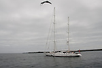 Many sailboats on their sail around the world also come to puerto ayora galapagos