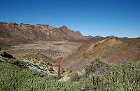 Single Tajinaste flower in the volcanic landscape of Tenerife, Canary Islands ,lava,crater,spring,tenerife,cañadas national park,