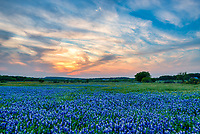Just came across this image of the field of bluebonnets we took several years ago next to the old farm house in Marble Falls.  Unfortunately this field is gone forever now as they are building the New PEC office  there. I had not put this out here but since it the last memory of this bluebonnet landscape next to the old farm house it deserve to be seen. Love the sky which was a swirl of clouds and as the sunset it picked up the colors with a nice glow.