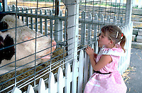 Girl age 5 looking at cow at Minnesota State Fair petting zoo.  St Paul  Minnesota USA
