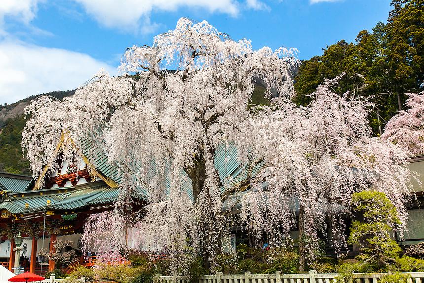 Minobusan Kuonji Temple