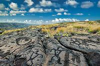 Rock petroglyhs. Hawaii, The Big Island.