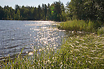 Sun Sparkled Lakeshore during Idyllic Finland Summer