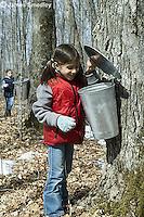 Young girl peeking into sugar maple sap bucket
