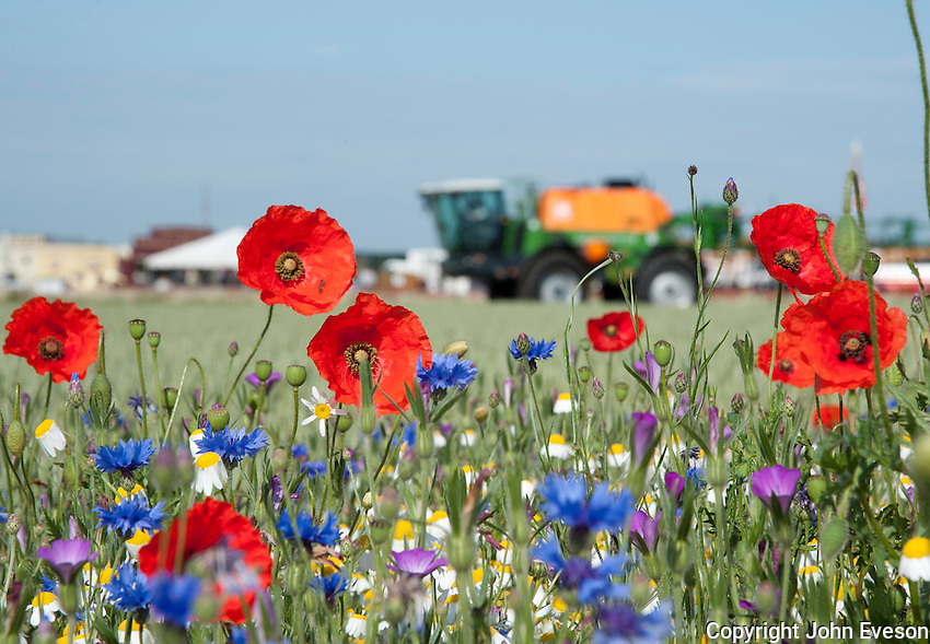Wild flowers with sprayer in the background, Lincolnshire.