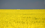 AGRICULTURE IN THE CANADIAN PRAIRIES<br />