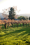 Winter season settles around Milat Winery, a family-owned and operated winery, in St. Helena, Ca., on Saturday, Dec. 5, 2009. Production is limited to about 3500 cases of estate-grown, produced, and bottled wine.