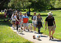 NWA Democrat-Gazette/ANDY SHUPE<br /> Participants and their dogs walk Saturday, May 6, 2017, around the park during the 25th annual Dogwood Walk benefitting the Humane Society of the Ozarks in Gulley Park in Fayetteville. The event featured dog trick and superlative competitions, vendors and a parade around the park.