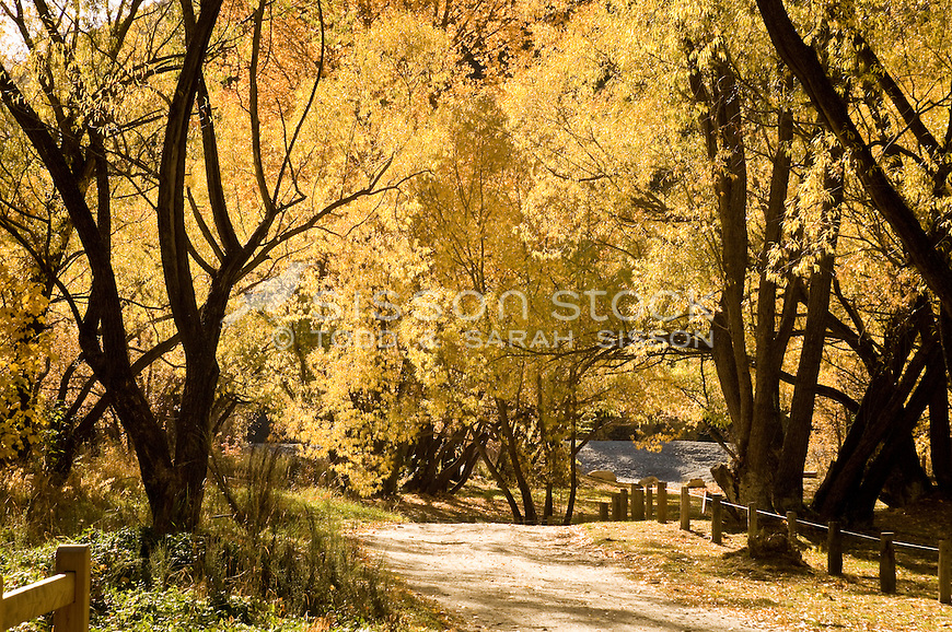 A pathway through golden yellow Autumn trees by the Arrow River, Central Otago, South Island, New Zealand