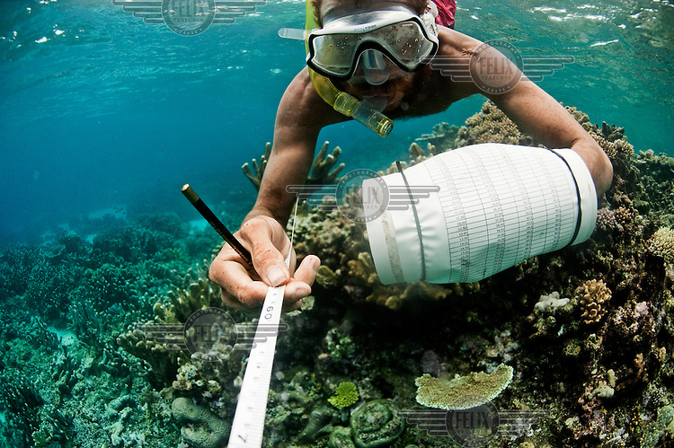 Simeon has been trained by Conservation International. Underwater, he examines a reef off Nuakata Island.