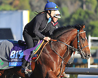 Shamshon, trained by Richard Hannon, trains for the Breeders' Cup Juvenile Turf at Santa Anita Park in Arcadia, California on October 30, 2013.