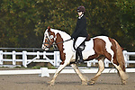 Stapleford Abbotts. United Kingdom. 09 November 2019. Class 2. Unaffiliated Dressage. Brook Farm training centre. Stapleford Abbotts. Essex. United Kingdom. Credit Garry Bowden/Sport in Pictures.~ 09/11/2019.  MANDATORY Credit Garry Bowden/SIP photo agency - NO UNAUTHORISED USE - 07837 394578